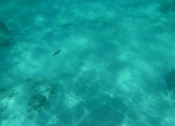 payu island (5)